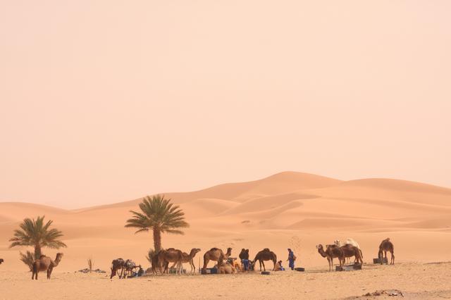 画像: モロッコラリーはアンダルシアに開催地を変更