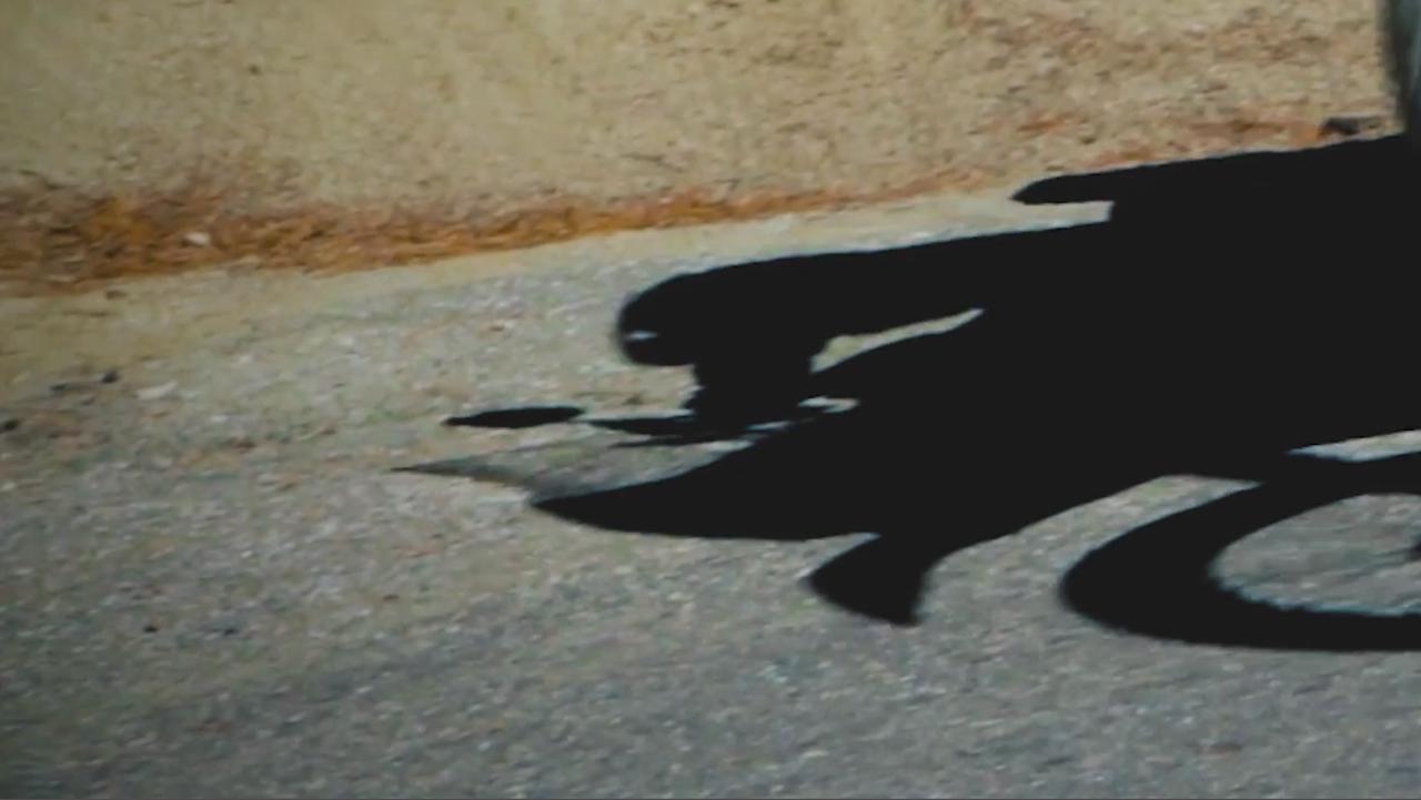 画像6: トレールバイクとアドベンチャー2台と予想