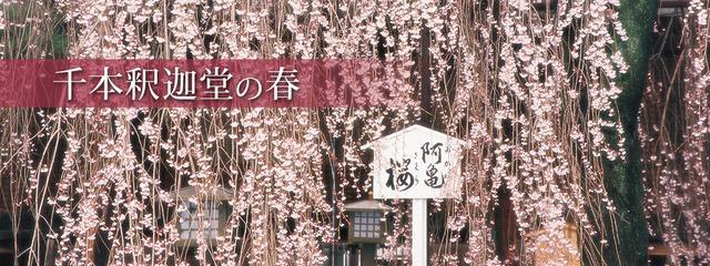 画像: トップページ|千本釈迦堂 大報恩寺