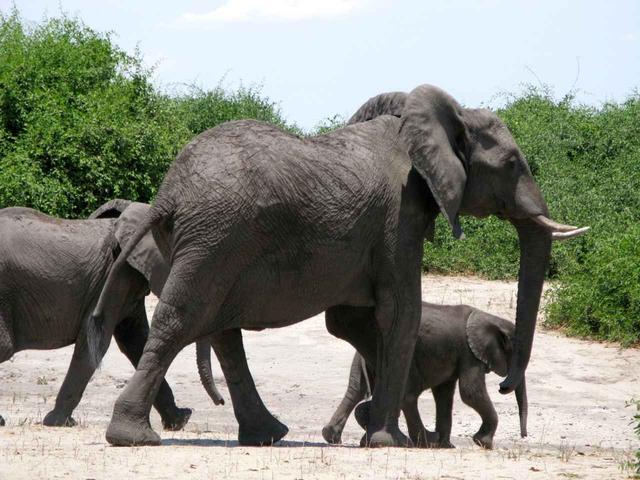 画像: 野生のゾウの親子にも出会えるかも!