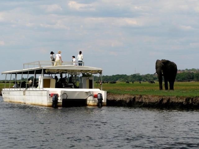画像: チョベ川のボートにはゾウがお出迎え