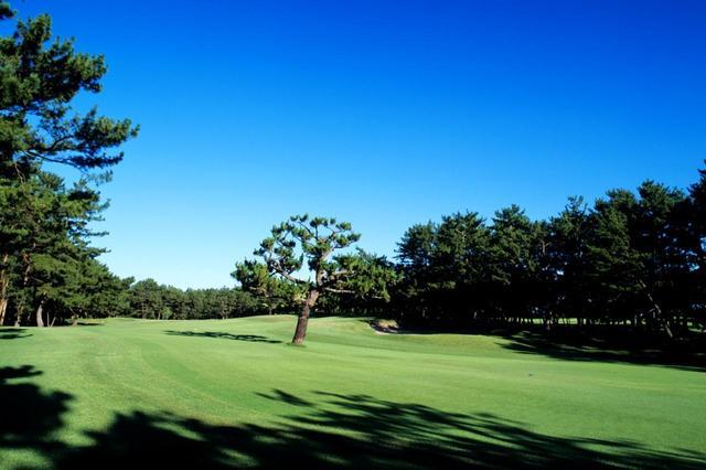 画像: 宮崎カントリークラブの特徴はフェアウェイに立つ松の木。1本の木が戦略性を高めるホールが随所に登場