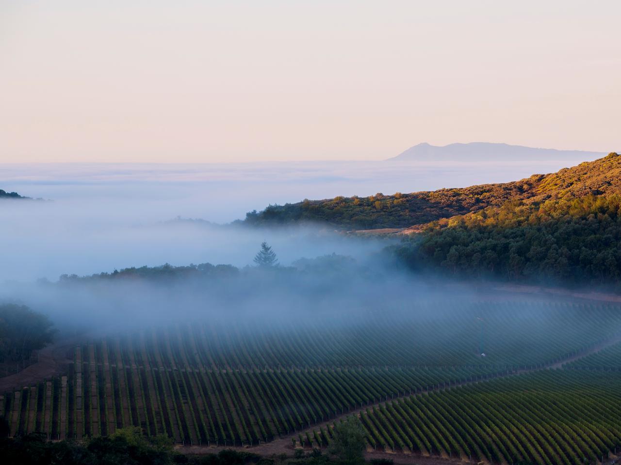 画像: 広大なブドウ畑が広がるナパバレー