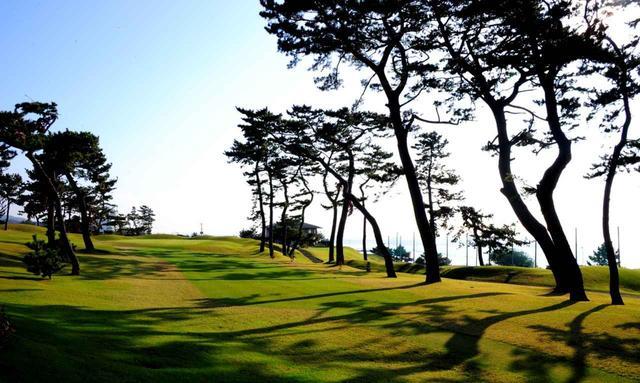 画像: 松の幹の傾きが海風を物語っている