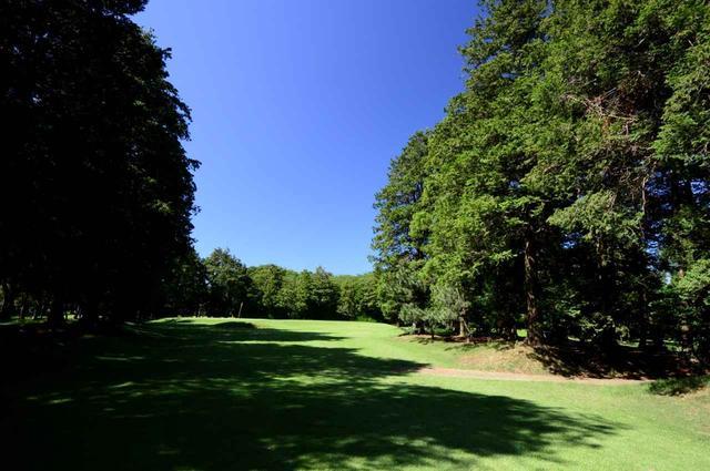 画像: 5番 122Y(ベントグリーン)。左右から大きな木が迫る!