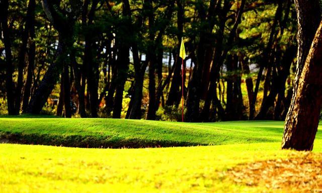 画像: 黒松の林の中を進む美しいコース。トム・ワトソンゴルフコース
