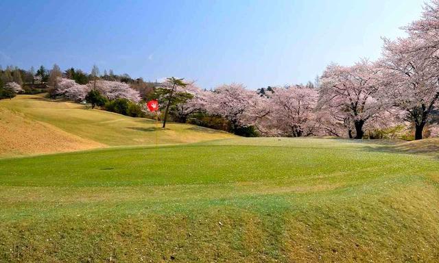 画像: 鳳凰ゴルフ倶楽部 赤松や雑木林、桜に囲まれた36ホール。秋には紅葉狩りゴルフ、春にはご覧のようなお花見ゴルフ、と四季の自然を感じることができるコース