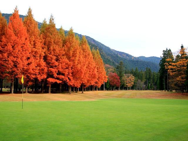 画像: 15番 392Y P4 杉の木は常緑樹だが、ご覧のように見事なえび茶色に!