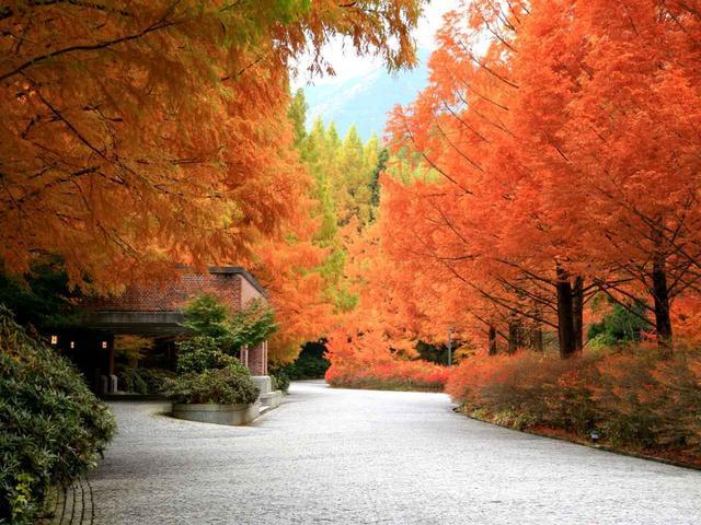 画像: 石畳のクラブハウス玄関アプローチ 朱色に染まった木立が出迎える