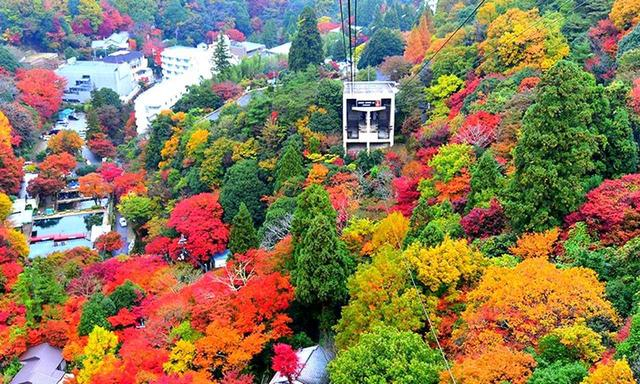 画像: 【六甲の紅葉スポット】六甲山頂と有馬温泉を12分で結ぶ六甲有馬ロープウェイ。眼下にはご覧のような紅葉が広がります。少し西に行くと、摩耶ロープウェイも絶景スポット。 くわしくはこちら
