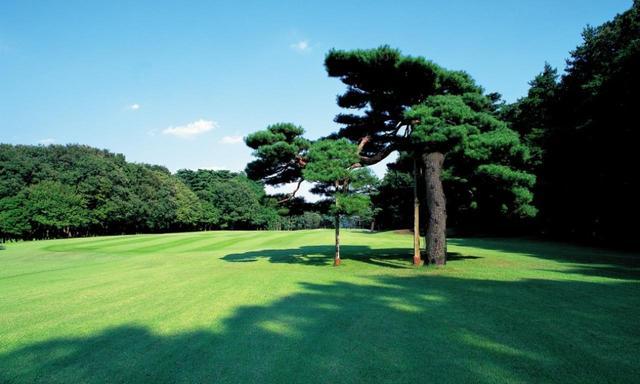 画像: 10番ホール/399㍎/パー4 フェアウェイ右には名物の老松が枝を伸ばす。右側にはOBがあるためティショ ットの狙いはやや左