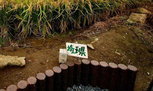 画像12: 【ゴルフ場クイズ】珍しい平地にある埼玉、栃木、群馬の「3県境」。ここのすぐ近くにあるゴルフ場にまつわる2問!