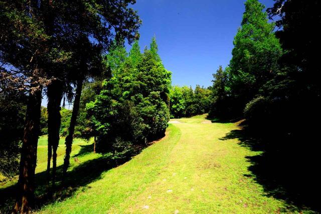 画像: 4番 61Y P3 左右の木の間を抜いて打つ