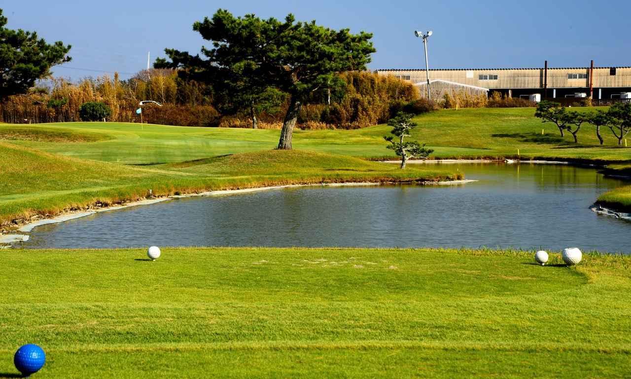 画像: 7番 171Y P3 手前に池、正面には木が立ちふさがるので狙いどころが難しい