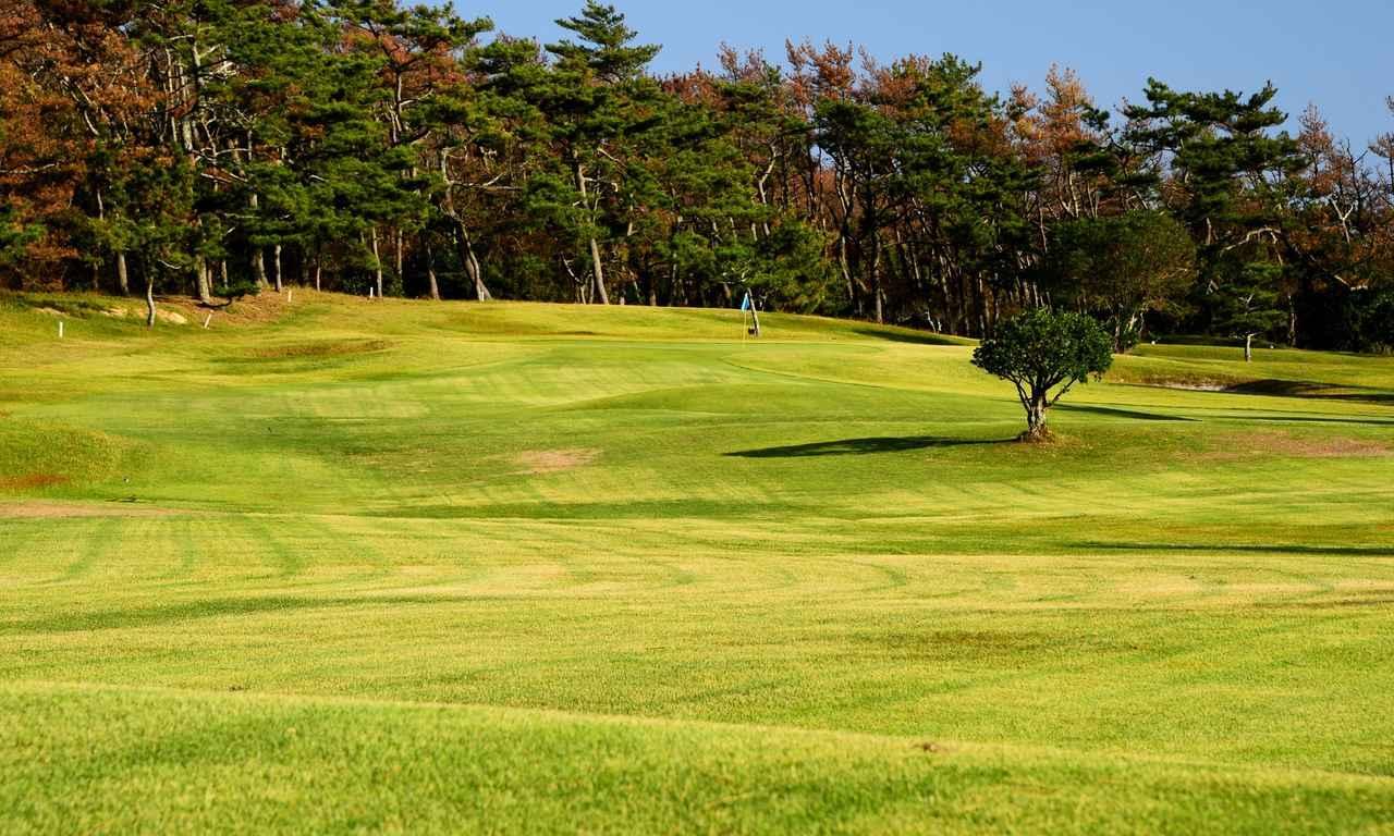 画像: 10番 335Y P4 フェアウェイの小さな木(写真)の左がティショットの狙い目