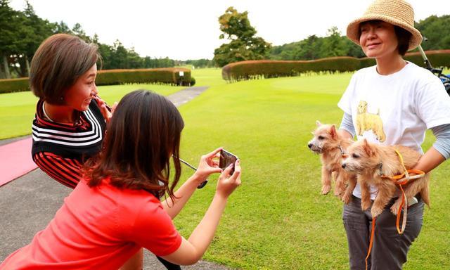 画像: ノーリッチテリアの子犬ちゃん、ウェルネスの森 那須に近い「ドギーコテージ」のブリーダー綱島さんが体験チェックのために連れてきてくれました!