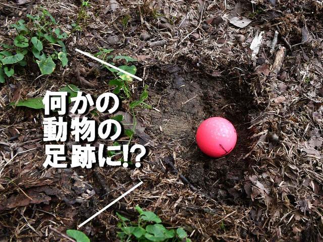 画像2: 【ルール】ボールが動物の足跡の中に! 救済できる? それともそのまま打つしかない?