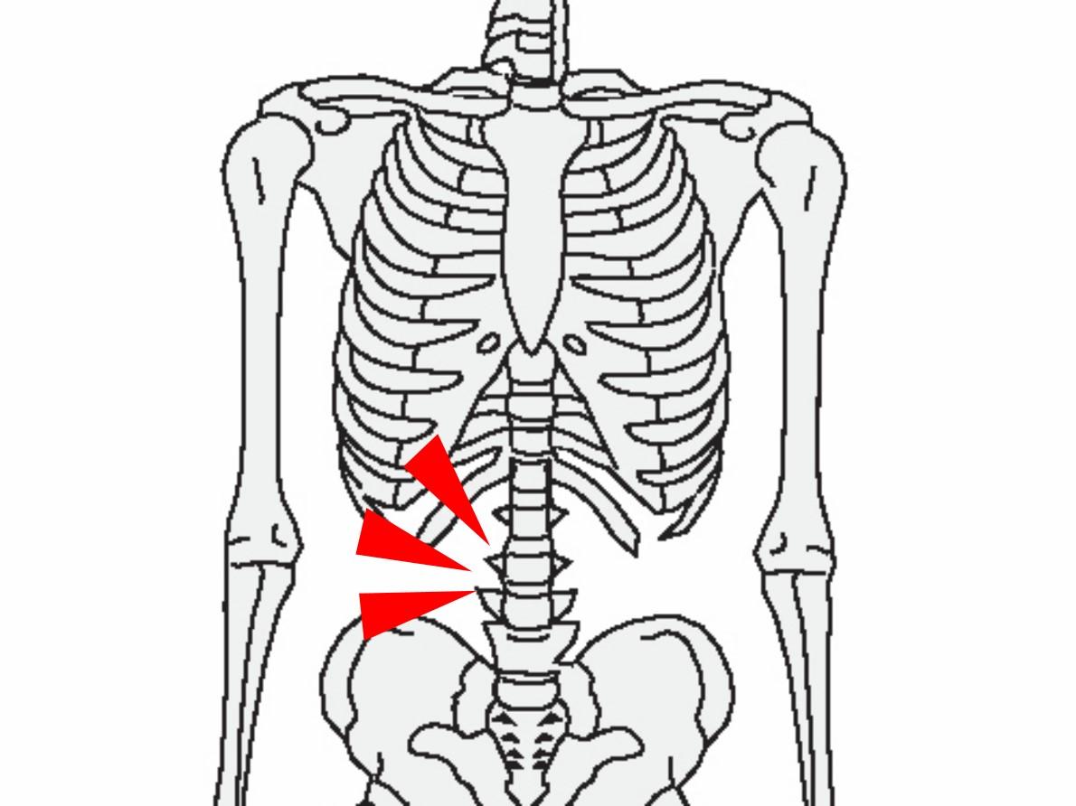 画像: 骨格を見ると体幹部の骨は腰骨だけ。インナーマッスルを鍛えないと安定感が生まれないのだ