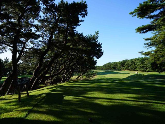 画像: 大洗GC17番(456Y・P4)江戸時代に植樹された防風防砂林の松林を活用した。以降、松林は日本のコース風景のスタンダードになっていった