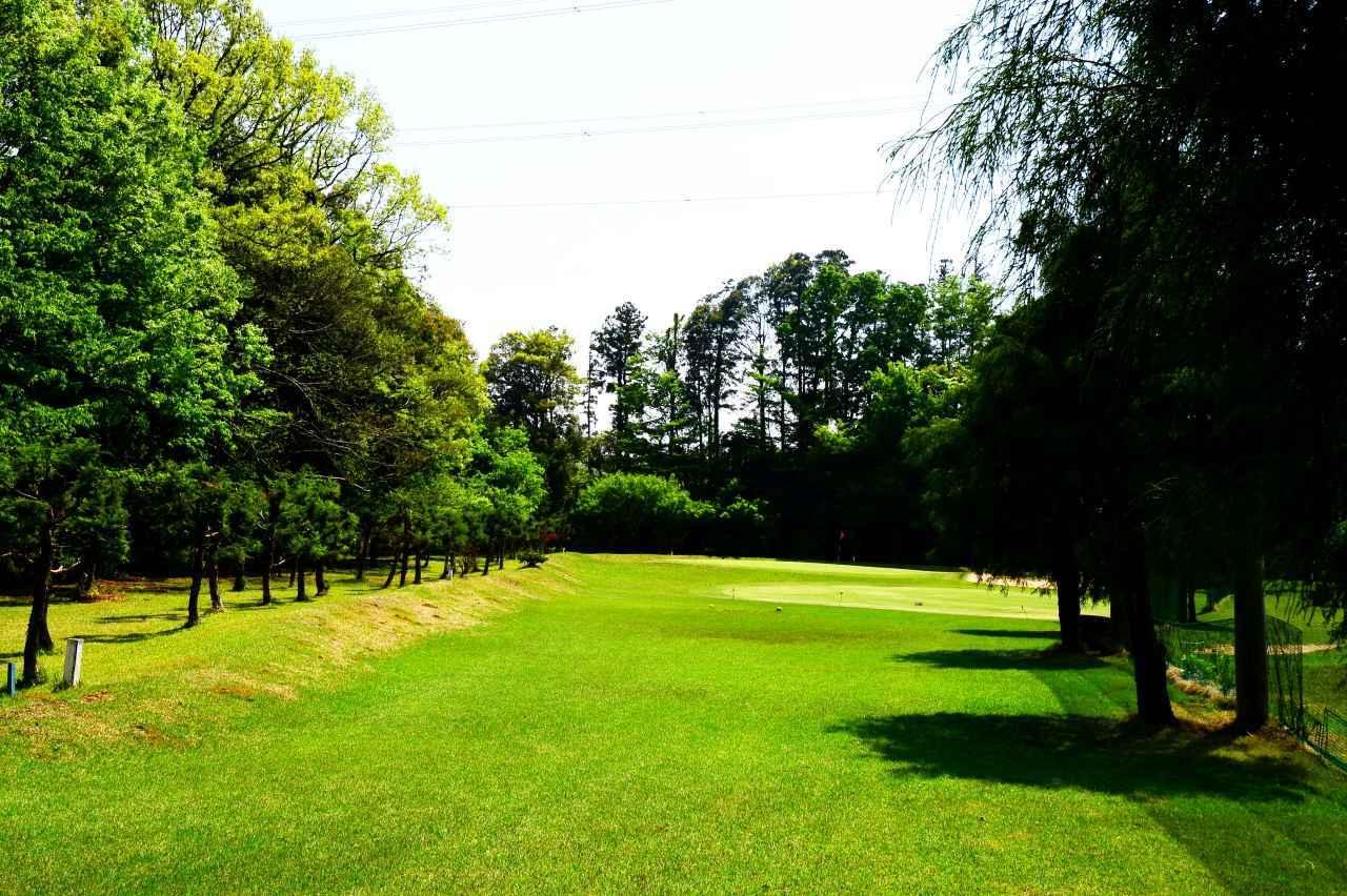 画像: 木々に囲まれたホールが続きます