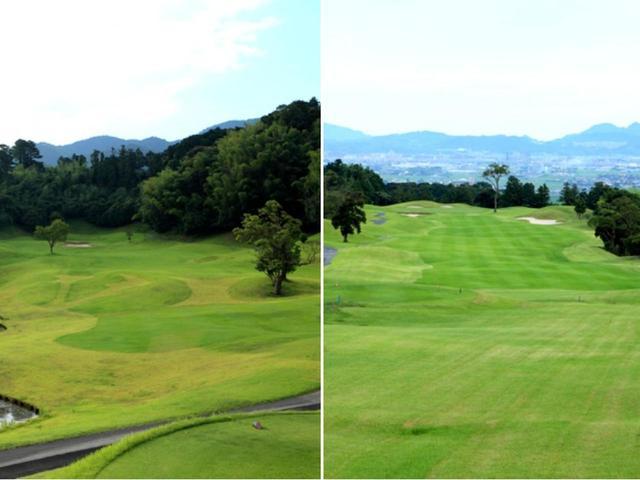 画像: 8番 316Y P4(左)2番 602Y P5(右)