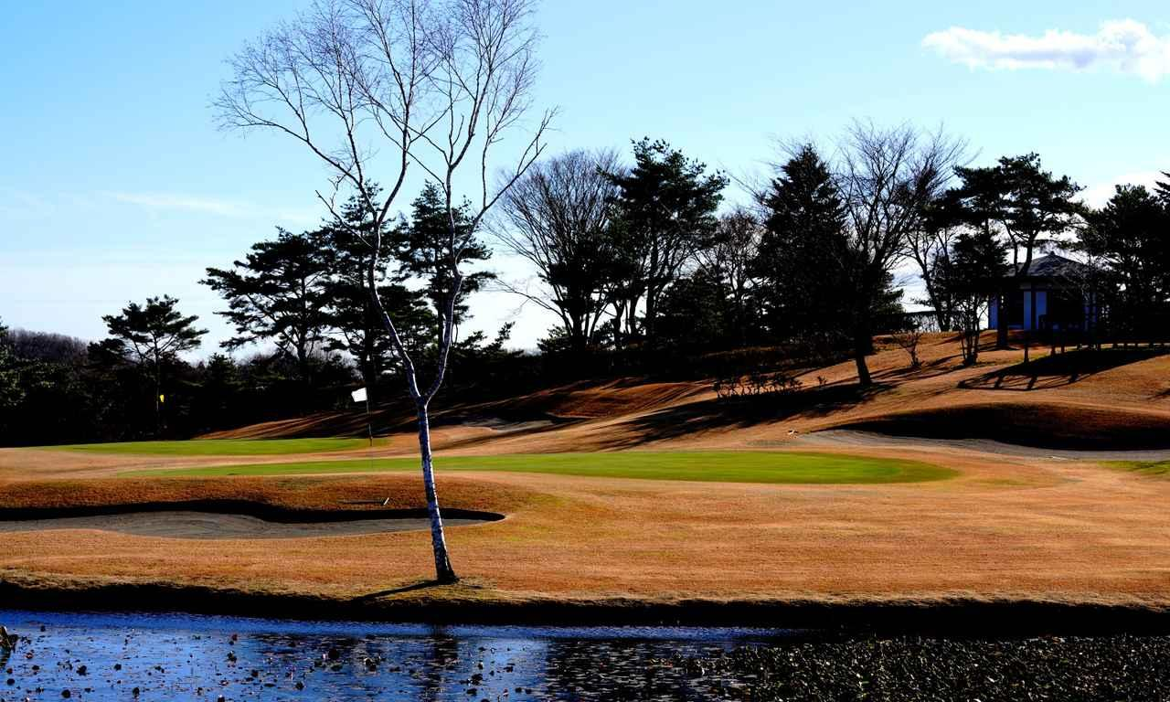 画像: 右の池から見た白グリーン。風向きは右から左