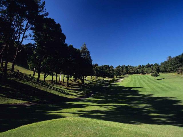 画像: 1番ホール/381㍎/パー4 ゆるやかな打ち上げのパー4で、1打目はフェアウェイ右にある楠方向を狙う。右側の傾斜上の林はOB