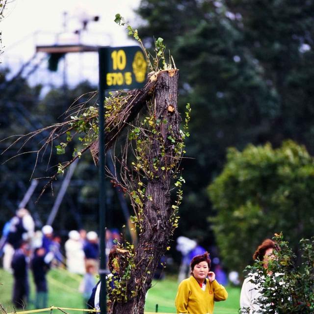画像: 風に折られた木。最終日には台風並みの風が吹き荒れた