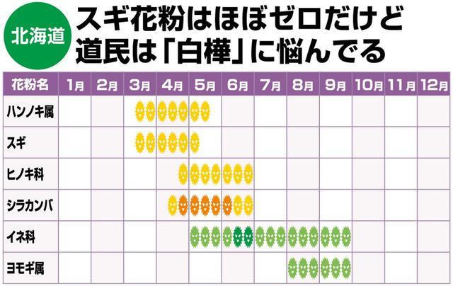 """画像: """" 避粉地"""" として知られる北海道。スギはほぼゼロだが道民は白樺(シラカンバ)花粉に悩む人が多い。「スギに反応する人は白樺に反応する可能性も。要注意です」(佐橋先生)"""