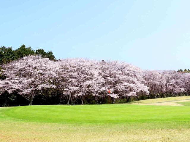 画像: 【茨城県】関東では珍しい桜も「桜の宮ゴルフ倶楽部」