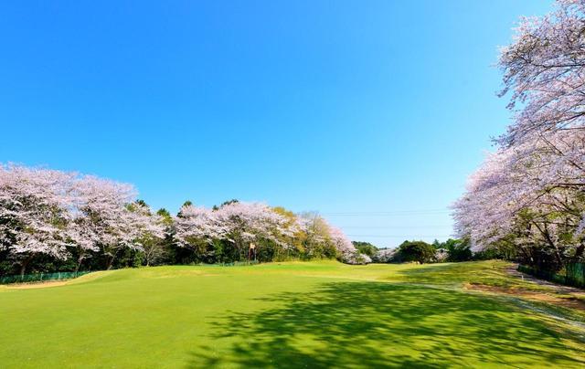 画像: 【千葉県】桜の種類が多く、咲く時期が長い「八千代ゴルフクラブ」