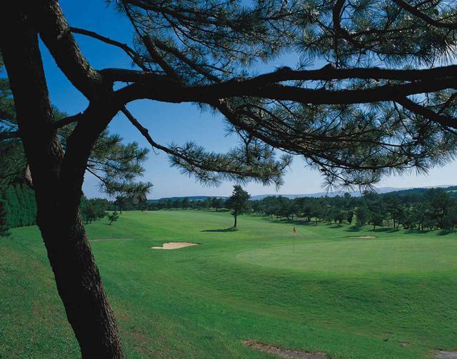 画像: 18番グリーンの手前には大きな木が待ち構える