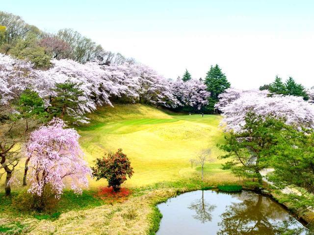 画像: 【栃木県】池の先には桜に囲まれたグリーン「栃木カントリークラブ」