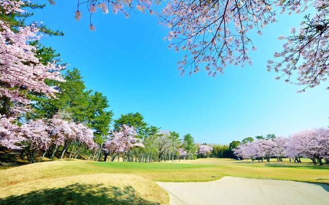 画像: 【千葉県】井上誠一・晩年の傑作に、1万本の桜が咲き誇る「鶴舞カントリー倶楽部」