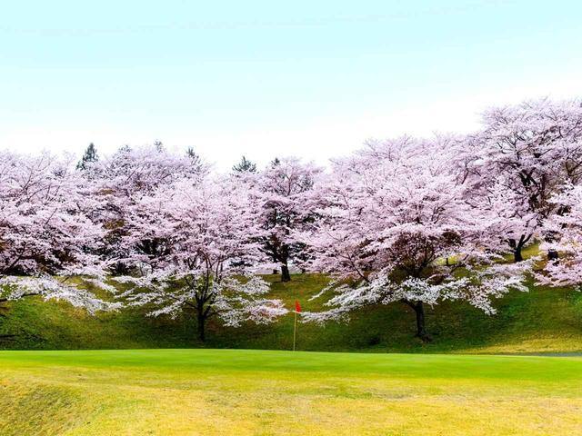 画像: 【栃木県】谷倉山の裾野に広がる桜並木「都賀カンツリー倶楽部」