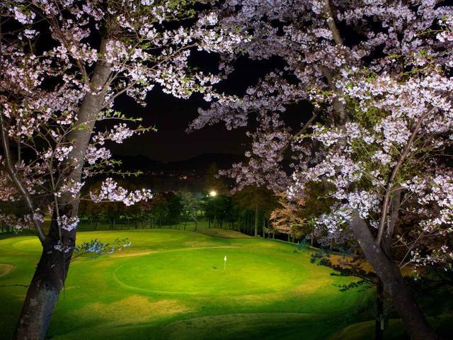 画像: 【神奈川県】薄暮・ナイターで夜桜を満喫「大厚木カントリークラブ桜コース」