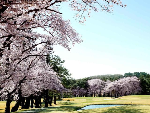 画像: 【埼玉県】池越えの8番を囲むソメイヨシノは圧巻「嵐山カントリークラブ」
