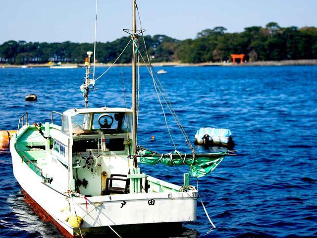 画像: トロール漁の本場「戸田」。沼津から車で1時間ほどにある山あいの小さな漁港。タカアシガニが有名