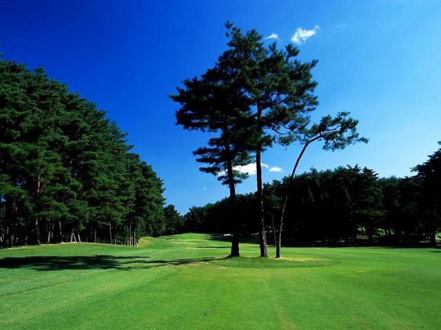 画像: 13番ホール/441㍎/パー4 樹齢数百年の赤松の独立樹を活かしたレイアウト、松のやや右狙いがベストルート