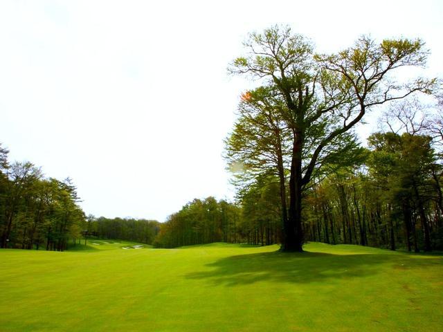 画像: 18番ホール(436Y・P4)に立つ桂の木