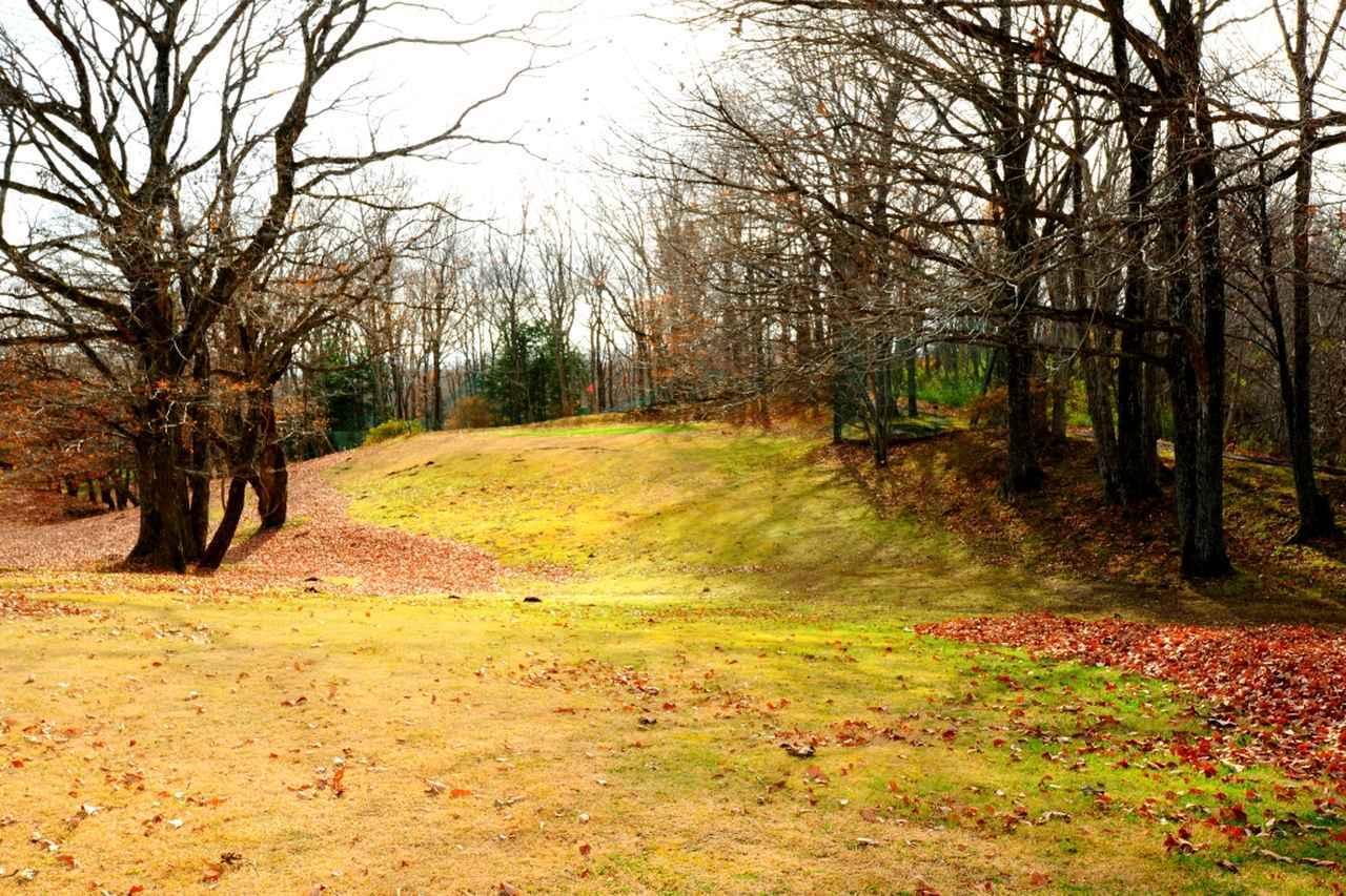画像: 1番(88Y)距離は短いが打ち上げ。両サイドの木の枝が邪魔をする