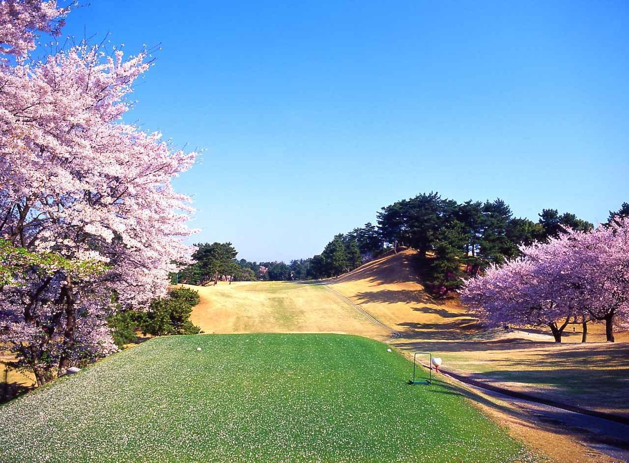画像: 桜の季節の2番ティーイングエリア