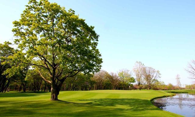 画像: 小樽CC新C16番ホール(504Y・P4)右に池、フェアウェイには大きな木がある。距離の長い難ホール