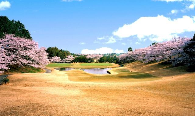 画像: 東コース6番ホール(353Y・P4)桜がグリーンと池を囲むお花見ホール