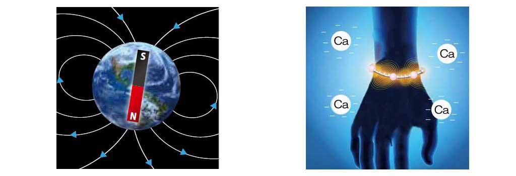 画像: 地球自体が巨大な磁石               カルシウムイオンが活発化する