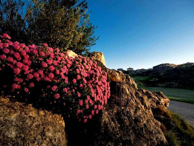 画像: 花と岩のコントラストがホールを飾ります