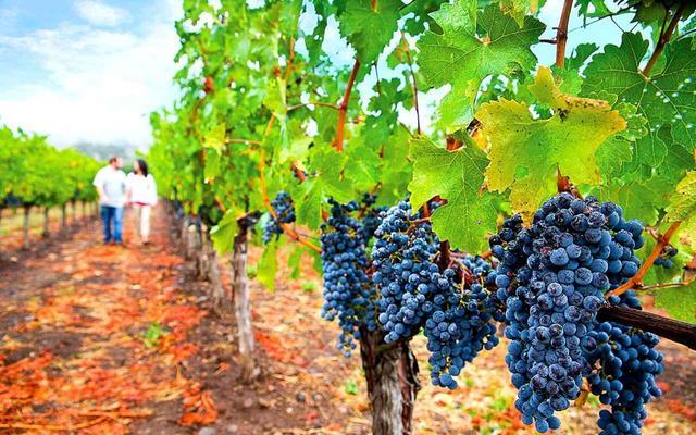 画像: ワインカントリー、ナパバレー