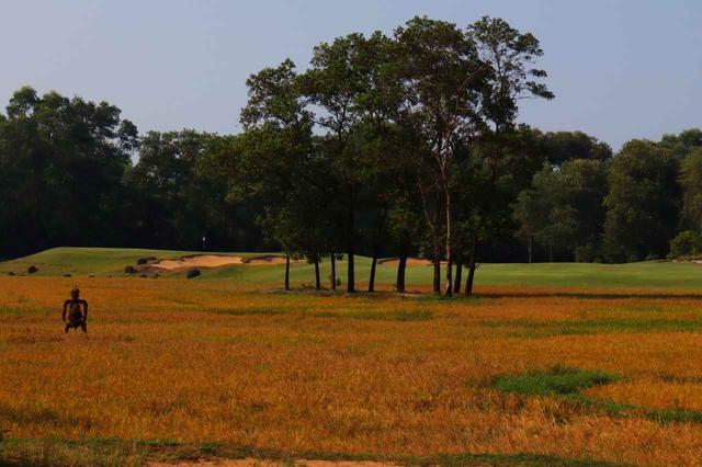 画像: ラグーナランコーGC  3番と4番の間には稲穂の田んぼが広がる