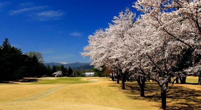 画像: 嵐山CC  桜の時期の風景