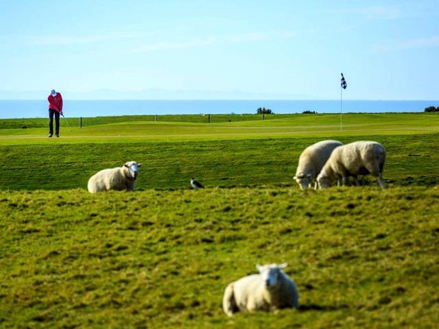 画像: (18H・7141Y・P71)羊も放牧されているニュージーランドの大自然コース。コースの向こうは海に向かって断崖絶壁